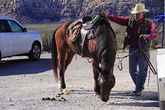 Man and His Horse (faungg's photos) Tags: horse man outdoors candid