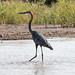 Lake Chamo wildlife