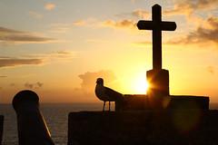 Cruz, gaviota y can (Contando Estrelas) Tags: santiago sunset espaa spain cross gull galicia cruz puestadesol gaviota ocaso pontevedra gaivota baiona bayona can batera