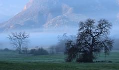 Morning Fog in Agoura Hills (Valentina Sokolskaya) Tags: california ca fog losangeles