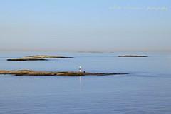 Gulf of Finland / Golfo de Finlandia (II) (suominensde) Tags: sea seascape reflection bird water finland landscape faro island mar haze nikon gulf outdoor horizon paisaje pa serene neblina beacon reflexion isla horizonte golfo pjaro finlandia fotoarte sereno d5300