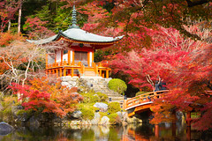 Autumn park (Krunja) Tags: autumn red building art nature beautiful beauty japan closeup architecture garden cherry asian temple japanese tokyo pagoda ancient kyoto shrine asia image buddha buddhist religion culture buddhism jp zen daigoji kytoshi kytofu