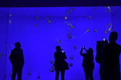 Visitors snap jellyfish in their massive tank (oldandsolo) Tags: canada ontario toronto torontocity lakeontario trainterminus trainterminal railwayterminal aerialview cbd torontofinancialdistrict railwayland formercoachyards ripleysaquariumofcanada fishtank livefish jellyfish seajellies seajelly medusozoa cnidaria tourists photography touristphotography backlighting backlit
