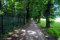 Walking through the trees (zawtowers) Tags: park trees 2 green london sunshine walking warm walk space exploring south capital sunday relaxing july sunny calm ring greenery serene stroll section 3rd amble eltham 2016 falconwoodtogrovepark