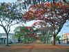 Avenida Goiás, Goiânia (GO) - Brasil.                                                                                           <<<<<>>>>>                        Goiás Avenue, Goiânia  (GO) - Brazil. (Opimentas) Tags: trees flower tree primavera nature brasil landscape spring october flor paisagem wikipedia arvore arvores vermelha flamboyant redflower goiânia outubro goiás pimenta wikimedia 2014 onofre gyn florvermelha wikipédia avenidagoiás onofrepimenta wikimédia opimentas bhto uriasmagalhães avenidagoiásnorte 2014october outubro2014 florflamboyabntflamboyantflower