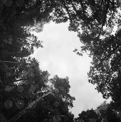 * (Der Ohlsen) Tags: bw 120 6x6 film analog mediumformat germany square deutschland mf schleswigholstein kiev88 arsatfisheye lomographyladygrey400