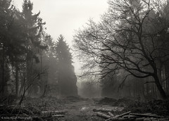 The woodcutters way (Andy Hough Photography) Tags: wood mist monochrome woodland blackwhite track timber sony logs mysterious oxfordshire atmospheric pathway a77 southoxfordshire littlewittenham sonyalpha andyhough earthtrust slta77 littlewittenhamwood sonyzeissdt1680 andyhoughphotography