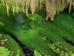 Silent Stream, Hoh Rain Forest (Nick_Fisher) Tags: flow stream silent flowing silentstream wawashingtonolympicrainforesthohrainforestnickfisher