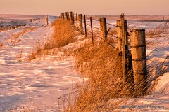 Happy Fence Friday (Thomas DeHoff) Tags: light snow fence golden sony iowa a580