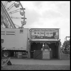 World's Smallest Horse (James Mundie) Tags: profjasmundie jamesmundie copyright©jamesgmundieallrightsreserved copyrightprotected availablelight fair carnival midway reithoffer shows reithoffershows sideshow outdooramusement blackandwhite bw blancoynegro biancoenero blancetnoir monochrome monochromatic schwarzweis 120 120mmfilm mediumformat squareformat 120film square 6x6 filmphotography chemicalphotography mittelformat kodak400tx kodak yashicaa tlr twinlensreflex bloomsburgfair fixedshadows