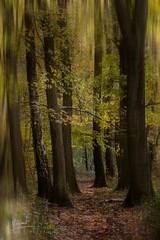 La forêt colorée (Vincent Le Borgne - Photographie Mystérieuse) Tags: automne couleursdautomne photoartistique forêtautomne forêtmystérieuse photographiebelgique leborgnevincent vincentleborgne