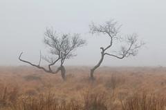 White Edge Moor (Paul Newcombe) Tags: uk november autumn trees england mist tree fog countryside derbyshire peakdistrict moors british peaks moorland 2014 canon24105l whiteedgemoor paulnewcombephtography paeakdistrictphotogrpahy
