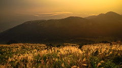 DSC01473_LR (a.lu.) Tags: sunset mountain scenery taiwan taipei miscanthus awn silvergrass datun japanesesilvergrass mtdatun