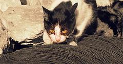 IMG_0022 (Stefania.Coreno) Tags: italy cats cat canon katzen gatti greatphotographers yahoo:yourpictures=blackandwhite potd:country=it