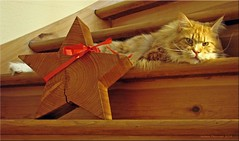 Wunderschöne Weihnachten - Merry Christmas - JOYEUX NOËL - Feliz Navidad 2014