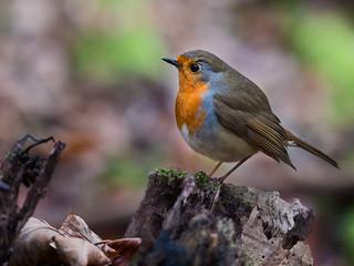 Robin company