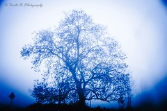 Traveling in the fog. (Vasilis R.) Tags: blue trees winter light shadow nature fog contrast forest deutschland photography photo nikon exposure colours photographer nebel photos ngc explore walt farbe excapture nikonflickraward nikond3300