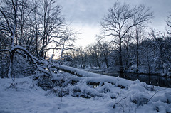 DSC_0088 (Michael P Bartlett) Tags: trees winter sky snow ice vermont