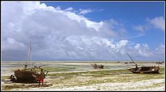 i20141108_110622b (KrisFricke) Tags: beach dhows whitesand traditionalsailingvessels