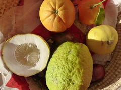 Various citrus fruit (seikinsou) Tags: winter brussels orange fruit lemon belgium belgique bruxelles mandarin clementine citron bergamot