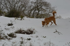 Roxy in the snow #4