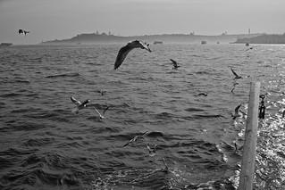 Birds of The Bosphorus