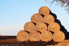 Hay Bale Pyramid. (aaroncookdigital) Tags: field countryside norfolk hay bales aaroncookdigital