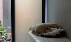 Cozy Corner (Mo_nte) Tags: sleeping pet pets cute animal animals cat photography kitten time wildlife sleepy napping naptime