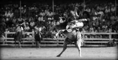 El reservado overo (Eduardo Amorim) Tags: horses horse southamerica criollo caballo cheval caballos cavalos pferde cavalli cavallo gauchos pferd chevaux gaucho  amricadosul uruguai gacho amriquedusud  gachos  sudamrica suramrica amricadelsur sdamerika crioulo caballoscriollos criollos jineteada  americadelsud gineteada tacuaremb crioulos cavalocrioulo americameridionale caballocriollo campeiros campeiro eduardoamorim cavaloscrioulos
