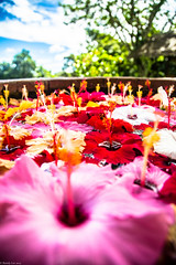 AWishing Well of Colorful Flowers_001 (emoburnout) Tags: flowers orchids edenpark philippines hibiscus tropical davao wishingwell canon24105 canon6d colourartaward coloursplosion
