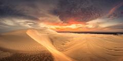 Yanerbie Dunes at Dusk (David Dahlenburg) Tags: light sunset panorama clouds landscape golden dusk pano dunes australia sa southaustralia sanddunes streaky streakybay dahlenburg yanerbie wwwdaviddahlenburgcom