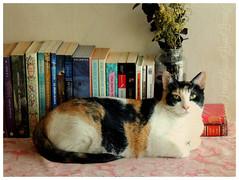 HABIA UNA VEZ UNA GATA.... ( leona ) Tags: calico gata libros mascota leona chulita nikonp510 leona264 leona coloniamiravalles