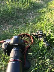 (nypan_sthlm) Tags: camera canon lens sony gear pro cameraporn norrtlje lensadpter potagrefy