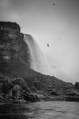 IMG_3919-1 (sweir429) Tags: newyork ontario canada niagarafalls waterfall unitedstates niagara