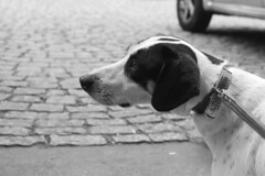 IMG_1478 (Mila Santa's Photography) Tags: cats dogs canon photography gatos ces cachorros fotografia animais ong srd adoo unibh adotartudodebom fotografiasolidaria caopartilhe caopartilheong feiradeadocao