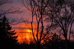 Du beau temps! (BLEUnord) Tags: park trees sunset orange nature weather clouds canon eos rebel evening soleil nice montral coucher notredame arbres contraste nuages temps paysage soir parc contrejour coucherdesoleil partlycloudy le temprature t4i circuitgillesvilleneuve lenotredame