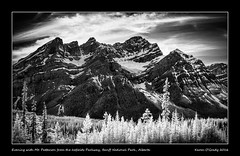 Evening with Mt. Patterson from the Icefields Parkway, Banff National Park, Alberta (kgogrady) Tags: trees blackandwhite bw panorama snow canada ice landscape rockies evening blackwhite spring nikon pano rocky sunny ab alberta infrared rockymountains dx banffnationalpark parkscanada icefieldsparkway canadianrockies 2016 westerncanada icefieldparkway canadianmountains highway93 d80 canadiannationalparks canadianlandscapes mtpatterson albertalandscapes photosofbanffnationalpark picturesofbanffnationalpark canadianrockieslanscape