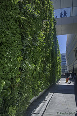 MOMA's Living Wall, #2 (Greatest Paka Photography) Tags: green plant outdoor museum sfmoma museumofmodernart livingwall greenengineering wall sanfrancisco art courtyard native building architecture