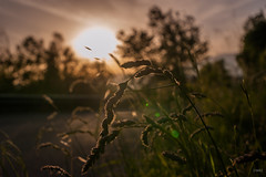 golden hour somewhere (Naebula) Tags: sunset never 35mm golden nikon tramonto hour flares neurosis d700 mir24n35mmf2