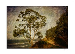 The tree (tmuriel67) Tags: texturas textures outdoors arbol tree landscapes paisaje nature