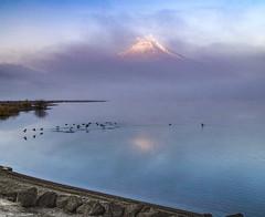 Winter morning Lake Yamanaka (shinichiro*) Tags: 20160107sdim0794 2016 crazyshhin sigmasd1merrill sd1m sigma18300mmf3563dcmacrooshsm january winter fuji lakeyamanaka birds fog cloud