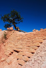 Stonewall (pentekno2) Tags: utah brycecanyon nationalparks bryce2016