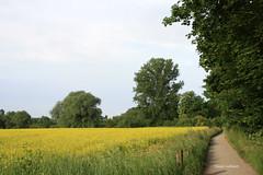 01-IMG_2427 (hemingwayfoto) Tags: blhen blte landwirtschaft natur