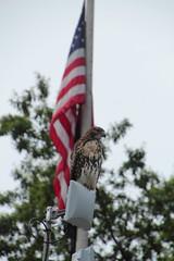 IMG_4523 (neatnessdotcom) Tags: park new york city nyc baby birds canon square lens eos rebel village zoom manhattan wildlife east telephoto ii di 18 tamron vc tompkins hawks 550d 270mm f3563 t2i pzd