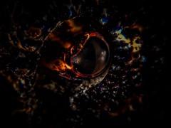 P5198953 (Jeannot Kuenzel) Tags: leica blue sea macro water port photography mediterranean underwater alien under deep scuba diving olympus malta zen supermacro moods asph f28 45mm underwaterworld s2000 dg 240z underwaterphotography extrememacro ois jeannot inon macroelmarit underwatercreature kuenzel z240 maltaunderwater underwatermacro underwateralien supermacrophotography ucl165 wwwjk4unet jk4u epl5 maltaunderwatermacro maltaunderwaterphotography bestmaltaunderwaterpictures maltamacro maltascubadiving underwatersupermacro jeannotkuenzel aliensofthedeepblue superextrememacro aliensofthesea