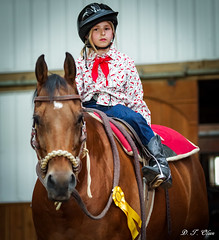 Show day-40 (Webbed Foot Photo) Tags: horses horse pennsylvania ponycamp webbedfootphotography pentaxk1 opengateranch darrenolsen dtolsen webbedfootphoto hunterhillsfarm