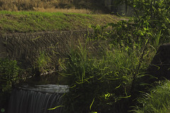 20160618-DS7_6729-6741-2.jpg (d3_plus) Tags: street sky plant mountains nature field japan bug nikon scenery nightshot dusk illumination daily  streetphoto nightview 28105mmf3545d toyama nikkor ricefield     dailyphoto  riceplant  28105 lightdisplay     28105mm   zoomlense        28105mmf3545 toyamapref d700 281053545 nikond700  aiafzoomnikkor28105mmf3545d  28105mmf3545af photoshopcc sankyovillage aiafnikkor28105mmf3545d