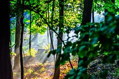 Morning Sun in North Jersey (michaelbbateman) Tags: morning trees sun mist sunshine sunrise woods plush kinnelon smokerise