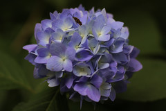 _MG_3062-Edit (Wyatt Ryan) Tags: flower bug flowers pink blue yellow canon nature botany bokeh animal animals adventure closeup minnesota