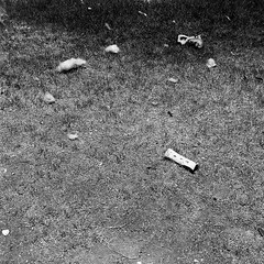 remnants (_in_dreamss) Tags: blackandwhite film ilford delta400 night day yashica mat124 portrait shadow bw 6x6 mediumformat 120mm filmphotography streetphotography bones dogs puppy boston terrier work checker color starwars event book man lights stuffing backyard outside nature phoenix arizona azdesert westcoast dry heat indoors colorless greyscale grey bars fence parkinglot surprise old town nightlife shutter cable tripod pool swimming summer beach ball water park mastiff lawn chair astro turf fetch jowls big boy play time splish splash canon shallow